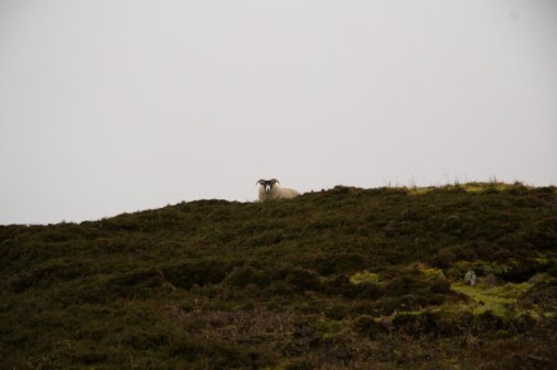 Other walker on Inishowen Head
